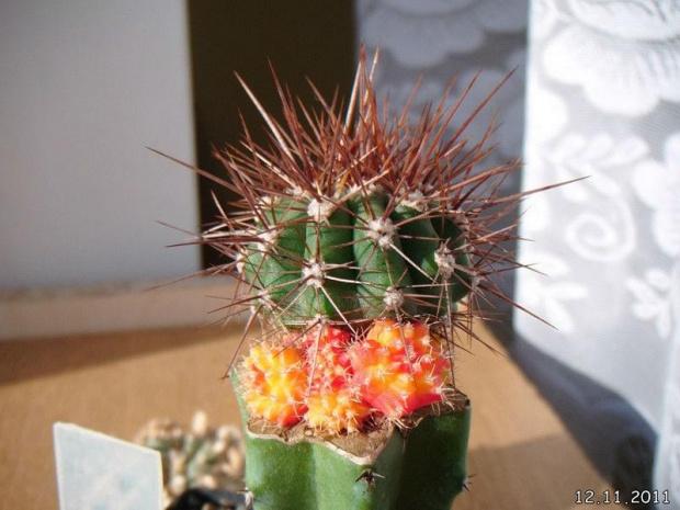 #Kaktusy