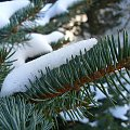 Ach, ta zima ;/ #zima #makro #mroz