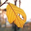 Jesienny liść. #widoki #przyroda #pejzaże