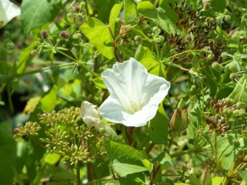 #kwiat #roślina #przyroda #lato
