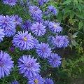 kwiat roslina kwiaty #wiosna #kwiat #roślina #przyroda