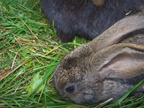 królik zwierzęta #wiosna