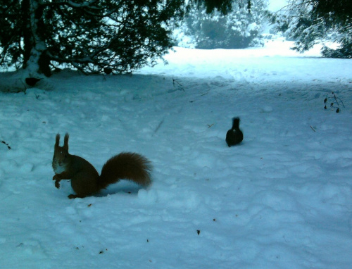 ...ktoś mnie wołał?:-) #wiewiórki