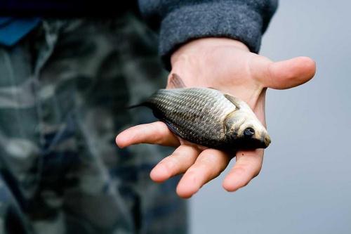 ryba, ręka, wędkarz #ryba #ręka #wędkarz