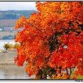 #Hamar #jesien #jezioro #liscie