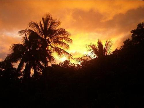 Zachod slonca / Laudat / Dominica / Karaibik 2006 #zachod #slonce #karaiby #wyspy #palmy #urlop #wczasy