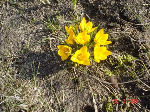 Pierwsze kwiatki.