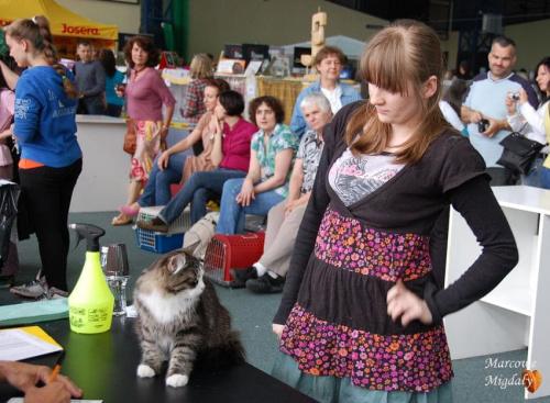 Wystawa Kraków 03.06.2012 - koty syberyjskie