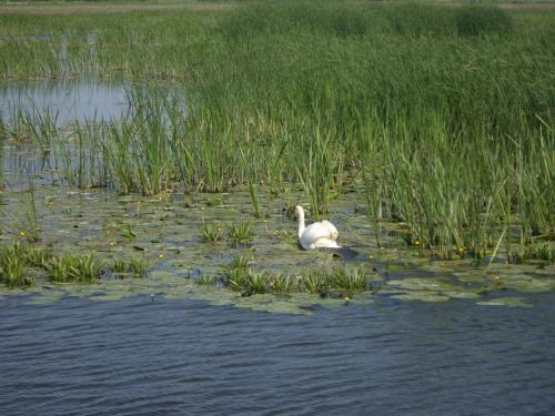 Jezioro Druzno.
