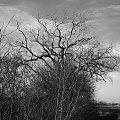 Pagan Morazko #poznań #morasko #żurawiniec #rezerwat #las #przyroda #black #metal #pagan