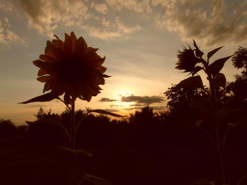 zachod słonca #chmury #niebo #slonce