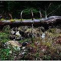 Morskie oko-Zakopane #MorskieOko #majówka