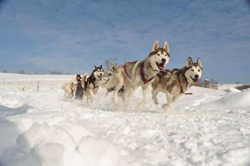 Wyścigi psich zaprzęgów #PsyWyścigiZaprzęgZima
