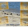 Pozdrawiam wakacyjnie! Zauważyłam, ze plaże sprzątają nasze ulubione ptaszki, wiec fotka! #ptaki #plaża #NadMorzem #lato