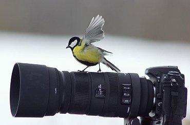 bogatka #ptaki #aparat