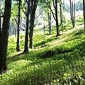 #natura #las #drzewo #słońce #cień