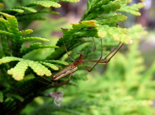 #pająk #pająki #natura #makro