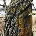 zima nad stawem #staw #zima #styczen