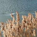 nad jeziorem #jezioro #zima #slonce #niebio