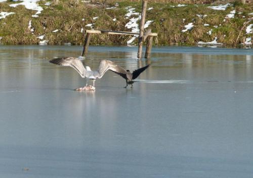 To jest moje... #Ptaki #przyroda #zwierzęta #natura