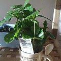 #zieleń #rośliny
