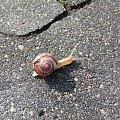 #lublin #ślimak #magooka #żaba #zwierzęta #samsung