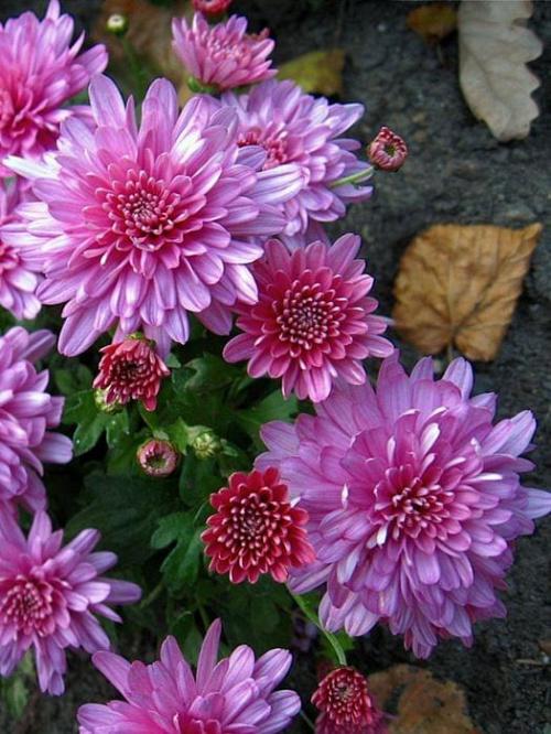 Bez tytułu,przecież widać #Kwiaty #rośliny
