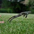 #przyroda #żaba #skok #ruch