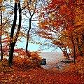 Gdynia - jesienny las #las #jesień #drzewa #liście #kolory
