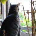 Oskar w poszukiwaniu ptaszków