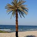 www.sztucznepalmy.pl #palmy #palma #sztuczne #drzewa