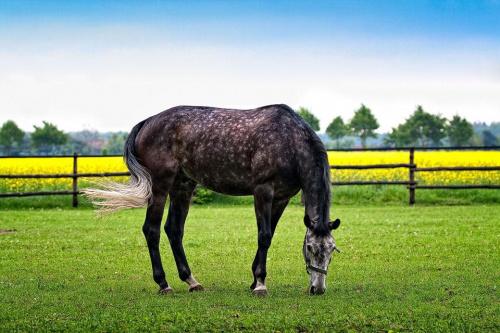 koń #koń #konik