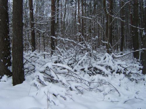 Zimowe pejzaże #Działka #ogródki