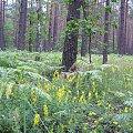 POLESIE -Sobiborski Park Krajobrazowy #Polesie #SobiborskiParkKrajobrazowy