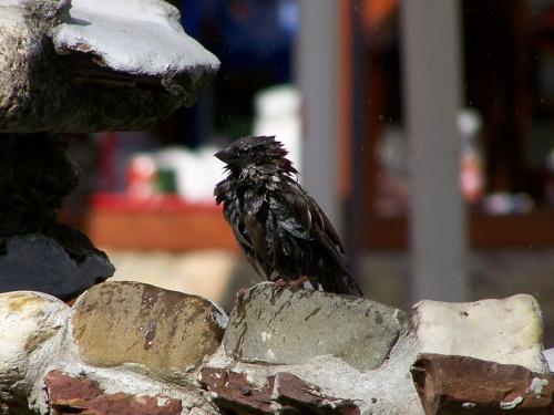 kąpiel #ptaki #ficiol007