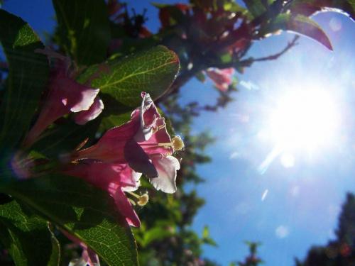 iść ciągle iść w strone słońca #makro #kwiaty #ficiol007
