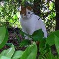 #Browar #Kot #piękno