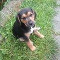 #Pies #psiaczek #słodziak