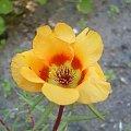 Hmm jakiś kwiatek lecz nazwy nie znam #kwiatek