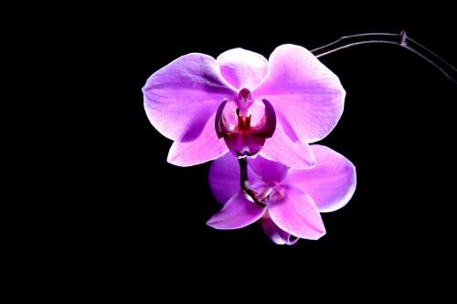 Kwiatek #kwiatek #naświetlanie #światło