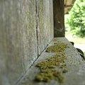 W poszukiwaniu piękna w starości #drzwi #drewno