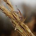zamaskowany #makro #żuk #chrząszcz
